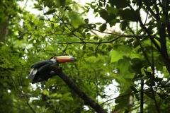 Aves15