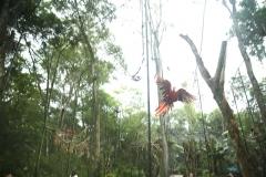 Aves6