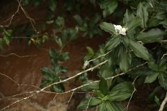 Iguazu5
