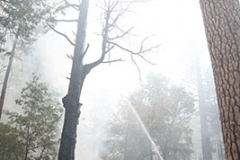 Arbre vs Pompier