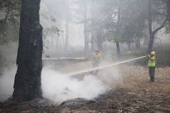 Pompier vs arbre