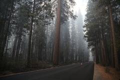 forêt fumante