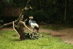 Aves24
