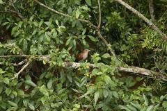 Iguazu16